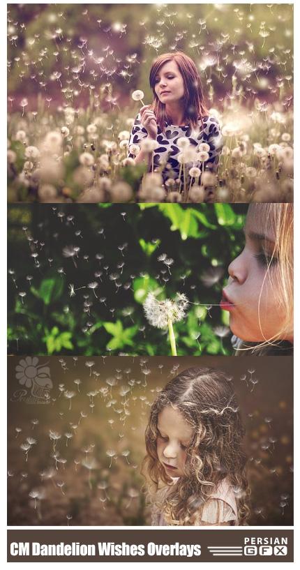 دانلود تصاویر کلیپ آرت قاصدک های پراکنده به همراه براش فتوشاپ - CreativeMarket Dandelion Wishes Overlays