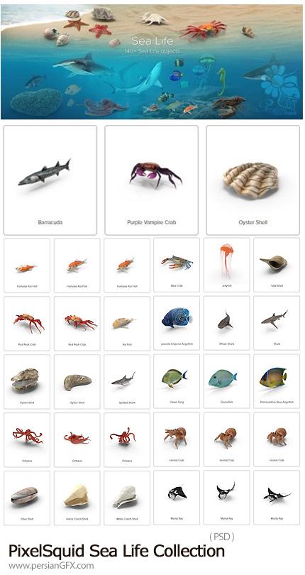 دانلود مجموعه تصاویر لایه باز موجودات دریایی، ماهی، کوسه، هشت پا، صدف و ... - PixelSquid Sea Life Collection