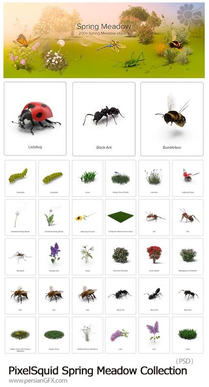 دانلود مجموعه تصاویر لایه باز علفزار بهاری، حشرات، سنجاقک، گل، چمن و ... - PixelSquid Spring Meadow Collection