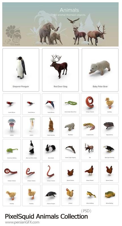 دانلود مجموعه تصاویر لایه باز حیوانات، طوطی، پنگوئن، فیل، خرس، مار و ... - PixelSquid Animals Collection
