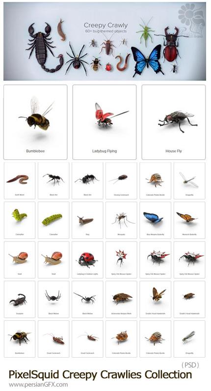 دانلود مجموعه تصاویر لایه باز حشرات متنوع، پروانه، پشه، مگس، مورچه، سوسک و ... - PixelSquid Creepy Crawlies Collection