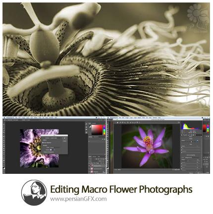دانلود آموزش ویرایش عکس های گل ماکرو از لیندا - Lynda Editing Macro Flower Photographs