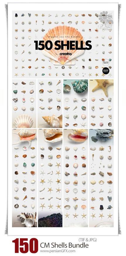دانلود 150 تصویر با کیفیت سخت پوستان دریایی، صدف، حلزون، ستاره دریایی و ... - CM 150 Shells Bundle Isolated Objects