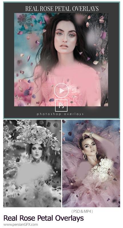 دانلود افکت لایه باز گلبرگ های رز برای تصاویر به همراه آموزش ویدئویی - Amanda Diaz Photography Real Rose Petal Overlays