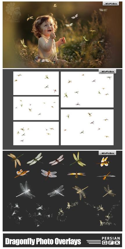 دانلود کلیپ آرت سنجاقک های متنوع - Dragonfly Photo Overlays