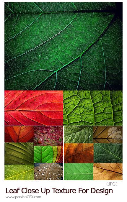 دانلود تکسچرهای با کیفیت کلوزآپ برگ های متنوع - Leaf Close Up Texture For Design Collection