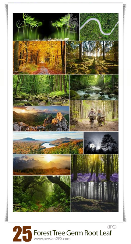 دانلود مجموعه تصاویر با کیفیت جنگل و درختان - Forest Tree Germ Root Bark Conifer Leaf