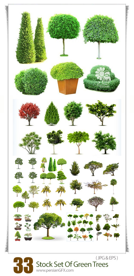 دانلود مجموعه تصاویر با کیفیت و وکتور درختان سبز با بک گراند سفید - Stock Set Of Green Trees Isolated On White Background