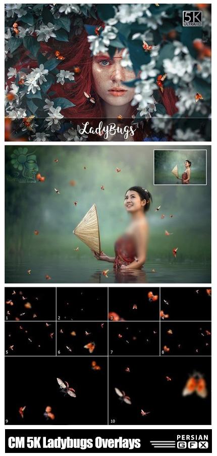 دانلود کلیپ آرت کفش دوزک های پرنده با کیفیت 5K - CM 5K Ladybugs Overlays
