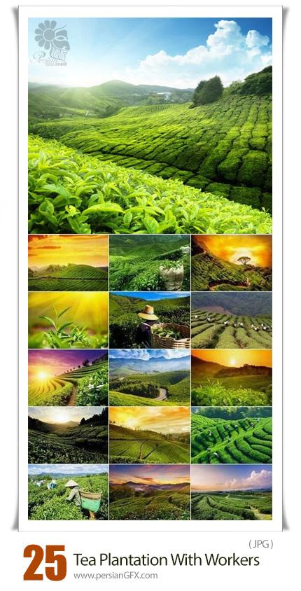 دانلود تصاویر با کیفیت مزرعه سبز چایی با کارگران - Tea Plantation And Green Fields With Workers