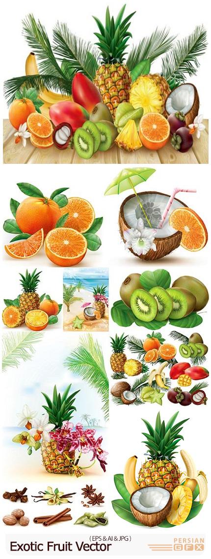 دانلود وکتور میوه های مختلف شامل کیوی، نارگیل، موز، آناناس و ... - Exotic Fruit Vector