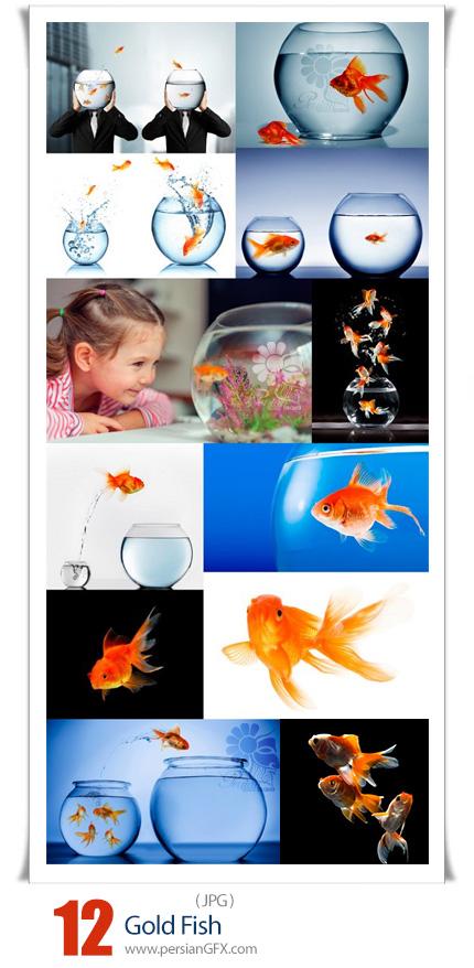 دانلود 12 عکس با کیفیت گلد فیش یا ماهی قرمز سفره هفت سین - Gold Fish