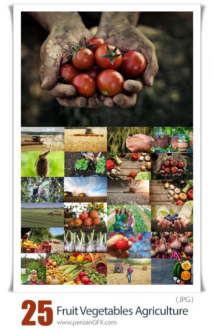 دانلود 25 عکس با کیفیت محصولات کشاورزی شامل میوه و سبزیجات - Fruit Vegetables Agriculture