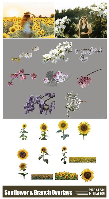 دانلود مجموعه تصاویر پوششی شاخه شکوفه و گل های آفتابگردان - Sunflower And Flower Branch Overlays