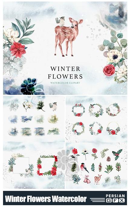 دانلود کلیپ آرت عناصر گلدار آبرنگی زمستانی - Winter Flowers Watercolor