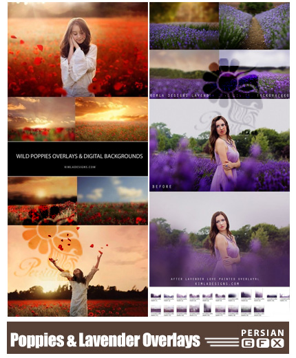 دانلود تصاویر پوششی گل های خشخاش و اسطوخودوس برای تزئین تصاویر - Wild Poppies And Lavender Love Overlays