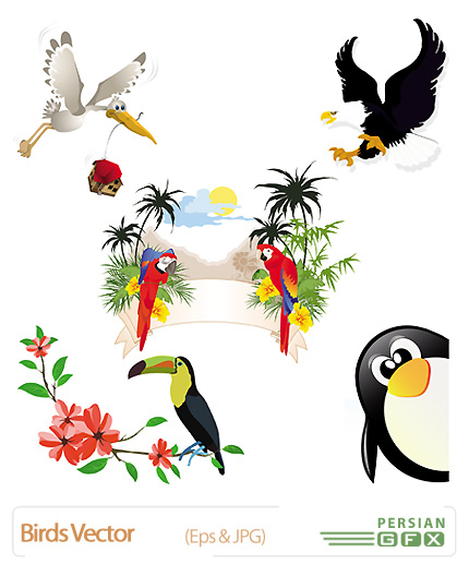 تصاویر وکتور پرنده -Birds Vector