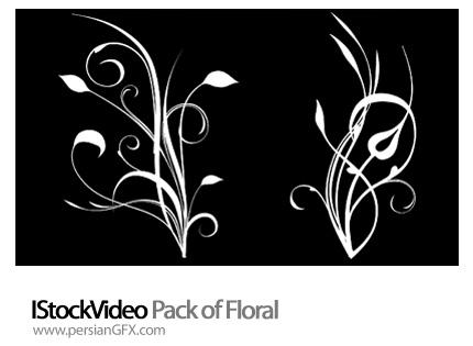 دانلود فایل آماده ویدئویی گل دار - IStockVideo Pack of Floral