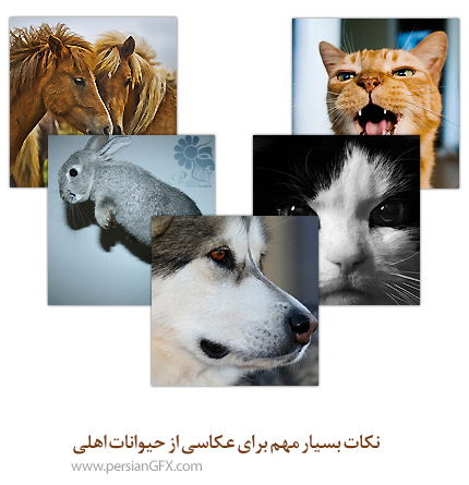 نکات بسیار مهم برای عکاسی از حیوانات اهلی