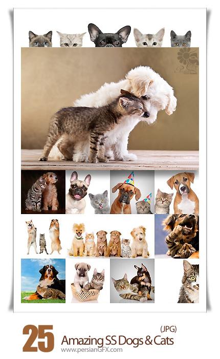 دانلود تصاویر با کیفیت سگ و گربه از شاتر استوک - Amazing Shutter Stock Dogs & Cats