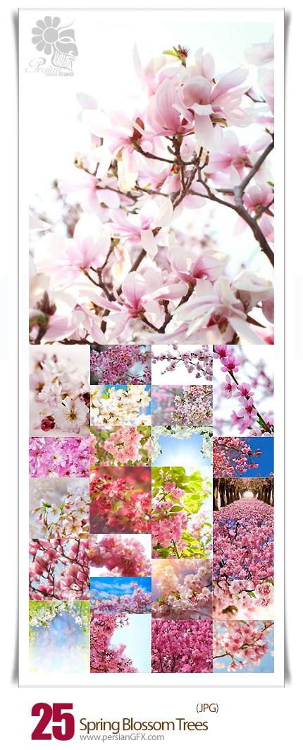 دانلود تصاویر با کیفیت درختان شکوفه های بهاری - Spring Blossom Trees