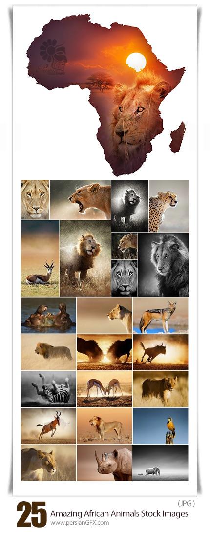 دانلود تصاویر با کیفیت حیوانات شگفت انگیز آفریقایی - Amazing African Animals Stock Images