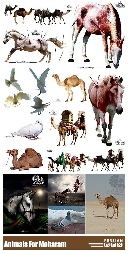دانلود المان های محرم و صفر شامل اسب، شتر و کبوتر