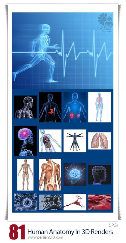 دانلود مجموعه تصاویر با کیفیت سه بعدی آناتومی بدن انسان، قلب، اسکلت، ریه، روده و ... - StockMIX Human Anatomy In 3D Renders