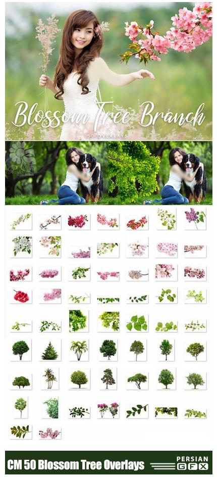 دانلود 50 کلیپ آرت گل و بوته و شکوفه های بدون بک گراند - CreativeMarket 50 Blossom Tree Branch Overlays