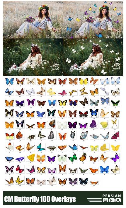 دانلود 100 کلیپ آرت پروانه های رنگی بدون بک گراند - CreativeMarket Butterfly 100 Overlays