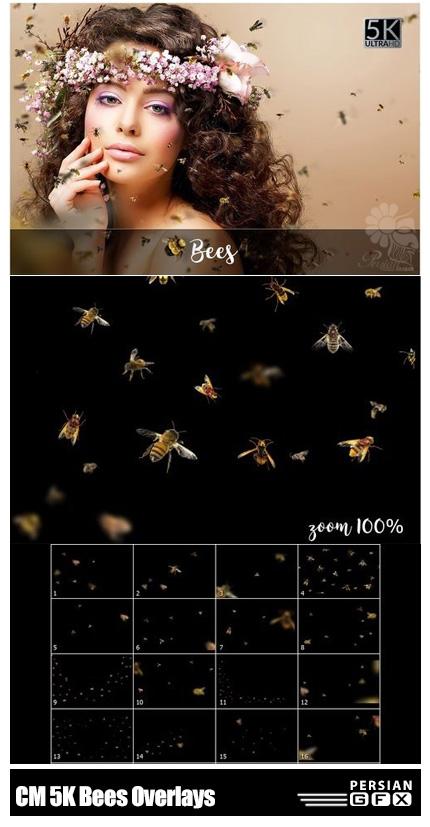 دانلود 20 کلیپ آرت زنبور با کیفیت 5K - CM 5K Bees Overlays