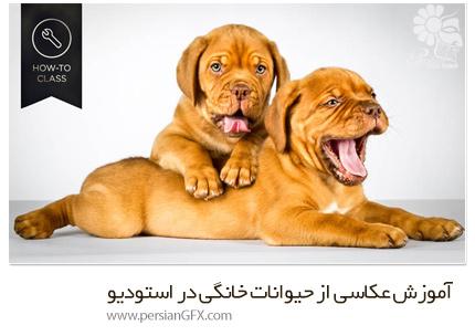دانلود آموزش عکاسی از حیوانات خانگی در استودیو - CreativeLive How to Shoot Pets in the Studio