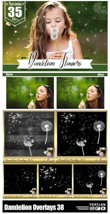 دانلود 38 تصویر پوششی قاصدک - 38 Dandelion Overlays