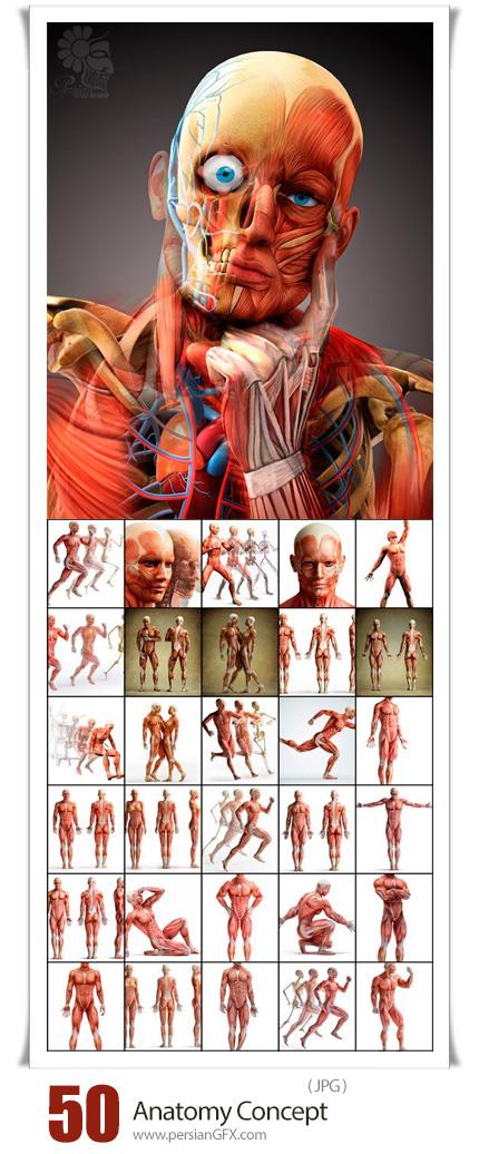 دانلود 50 عکس مفهومی آناتومی بدن انسان - Anatomy Concept