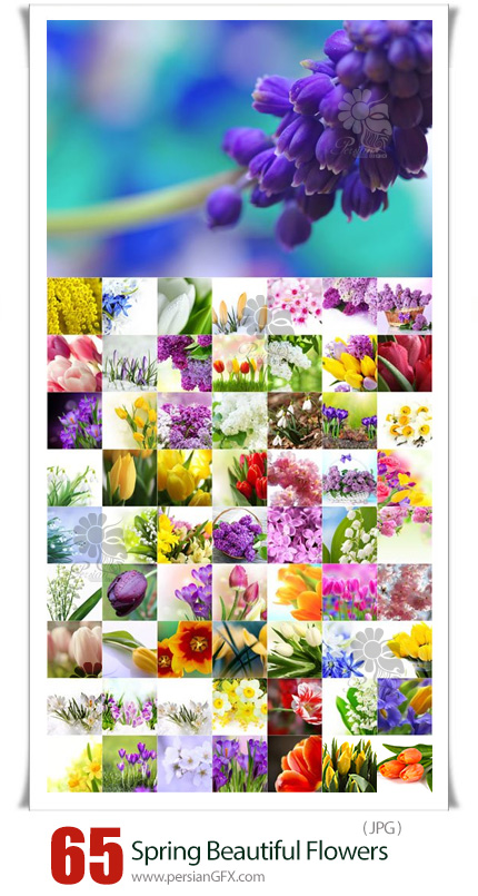 دانلود 65 عکس با کیفیت گل های رنگارنگ متنوع - Spring Beautiful Flowers