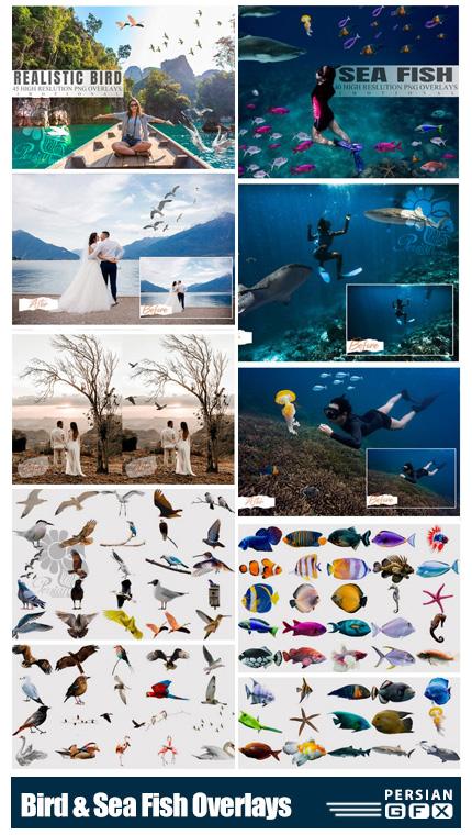 دانلود 85 کلیپ آرت پرندگان و ماهی های زینتی متنوع - Bird And Sea Fish Overlays