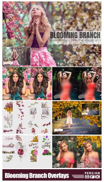 دانلود 35 تصویر پوششی شاخ و برگ شکوفه - Blooming Branch Overlays