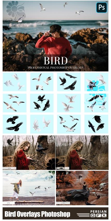دانلود مجموعه تصاویر پوششی پرندگان متنوع - Bird Overlays Photoshop