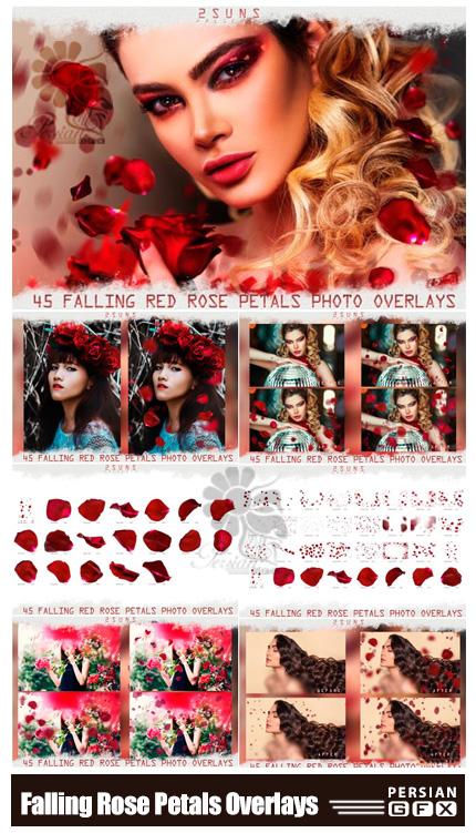 دانلود تصاویر پوششی ریزش گلبرگ های رز قرمز - Falling Rose Petals Photo Overlays