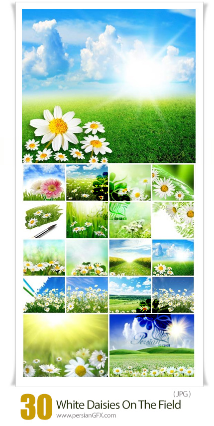 دانلود 30 عکس دشت سرسبز با گل های سفید - White Daisies On The Field